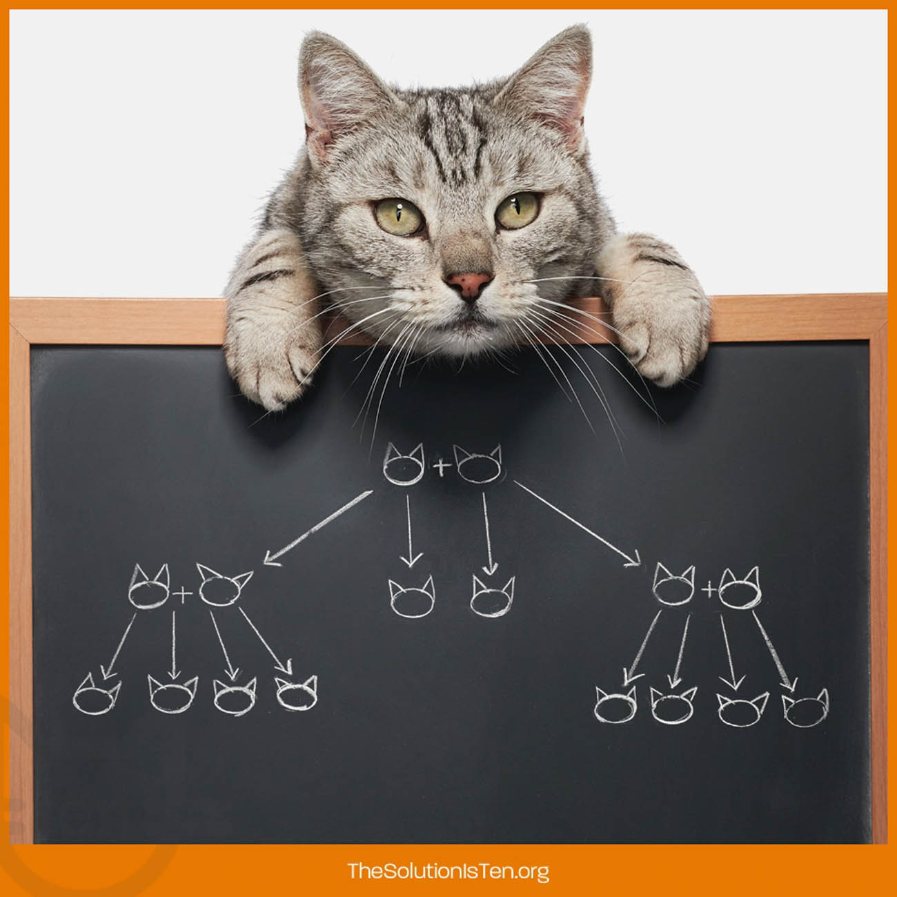 This marketing image illustrates how easily cats can multiply. / Image courtesy of The Ten Movement // Published: 2.17.19