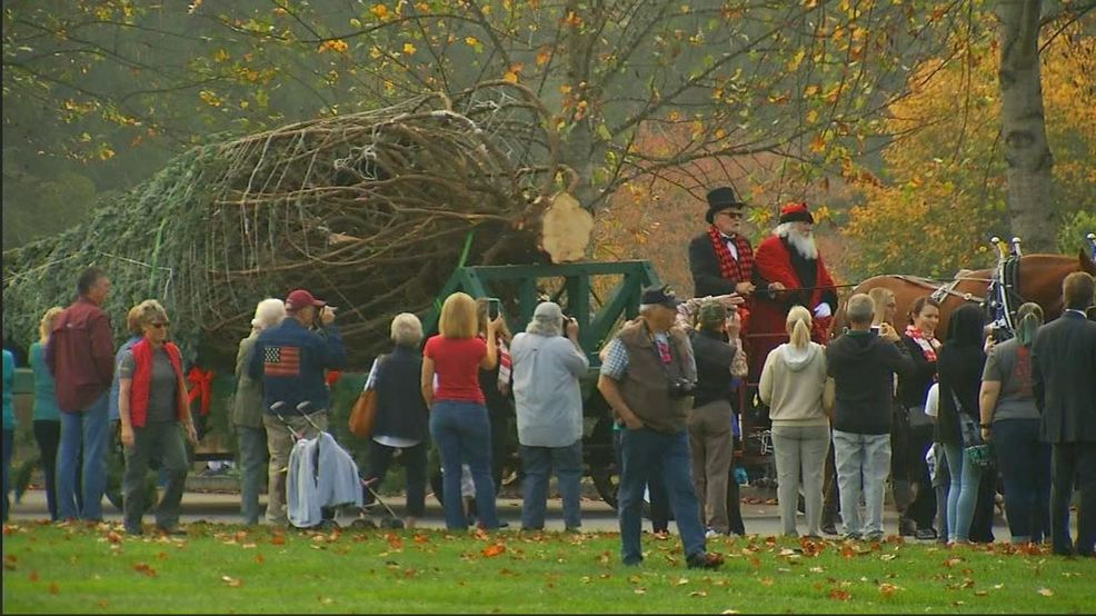 Biltmore House's 35-foot Christmas Tree Goes Up November 1