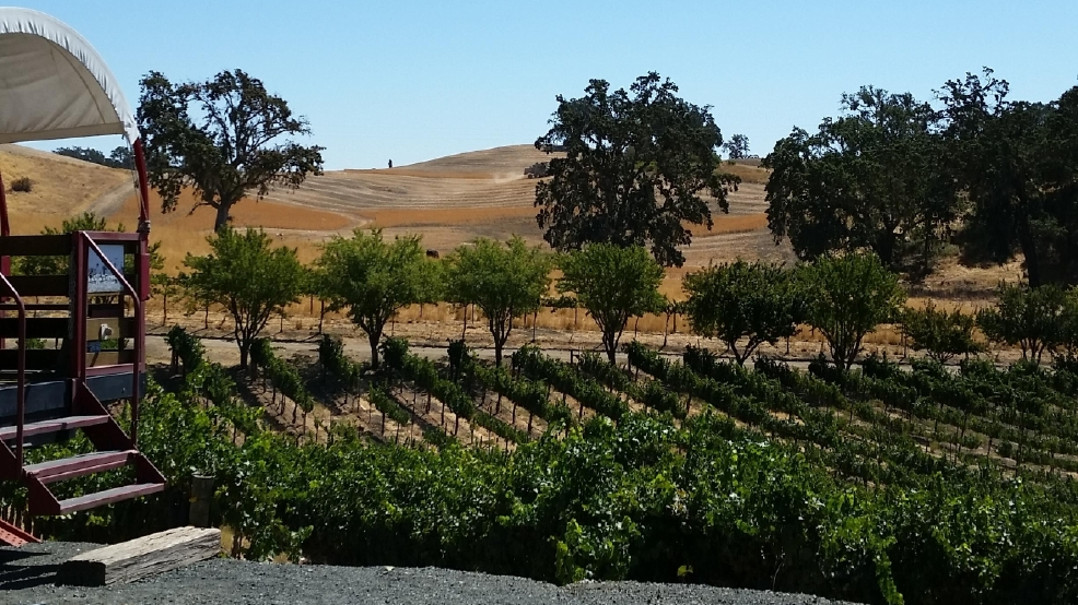 Oso Libre vineyards.jpg