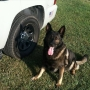 Rhode Island State Police mourn K-9 officer