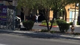 Police investigating fatal shooting at Las Vegas Starbucks; 1 person detained
