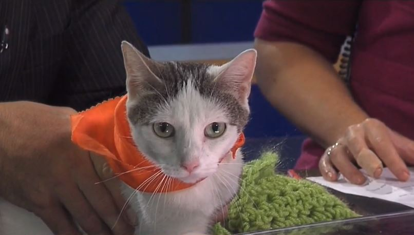 Atlanna, a 3-year-old cat, is 13WHAM's Pet of the Week.