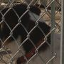 Arrest made after private animal shelter used by city found unsuitable