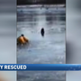 A puppy saved in East Greenwich after falling through ice