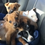 Box of puppies found abandoned near creek