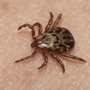 Maine is the worst state in the country for Lyme disease, study says