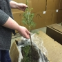 BLM selling tree seedlings to Coos Bay public