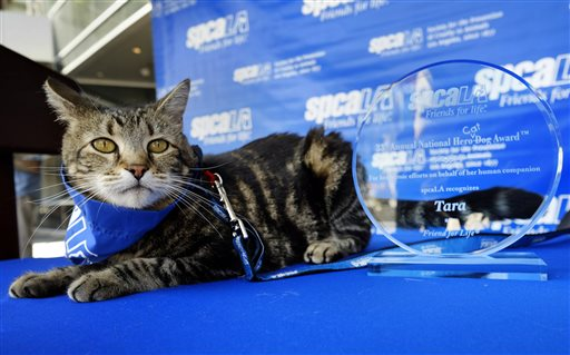 Tara, a 7-year-old adopted cat, poses for a photo with her award prior to being presented with the 33rd Annual National Hero Dog Award in Los Angeles.