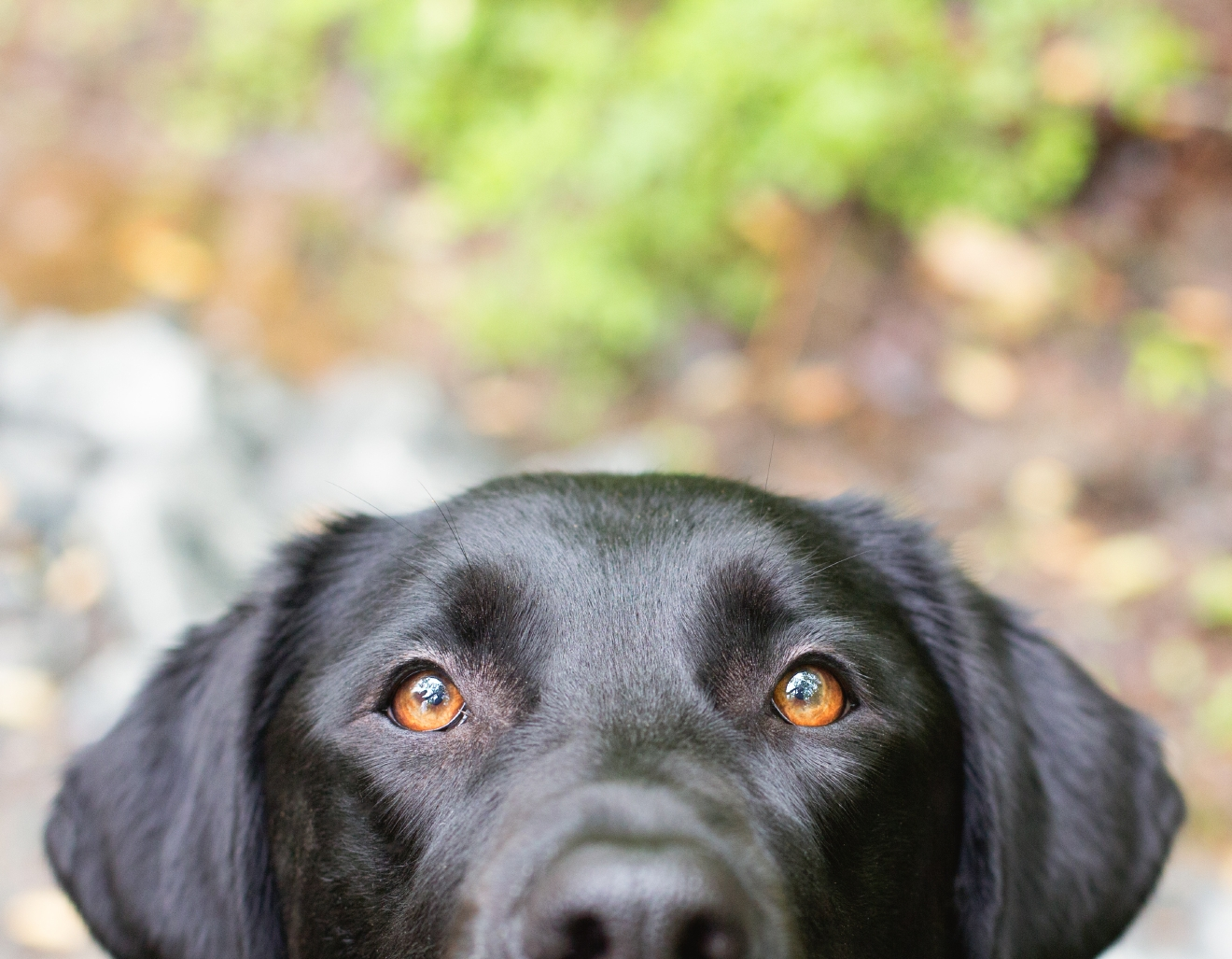 What photo are you most proud of? The beautiful eyes of the black lab (her name is Georgia) that is on the front page of my website.  (Photo: Fuzzypants Pet Photography)