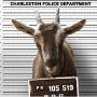 Facebook Users Baah-fled by Charleston PD's Sunday Night Call