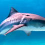 Experts endorse man's trick for determining if a shark is in the water