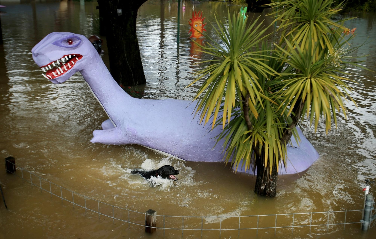 A dog swims pass the flooded dinosaur display at Playland Miniature Golf Course in Guerneville, Calif., on Wednesday Jan. 11, 2017.   Forecasters said precipitation would continue through Thursday,  (Kent Porter/The Press Democrat via AP)