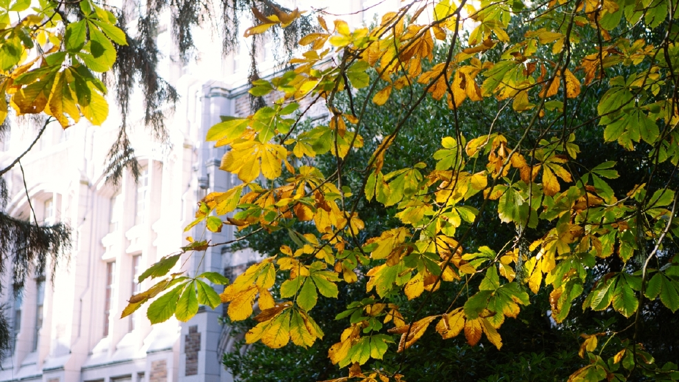 Photos: Fall colors at the University of Washington
