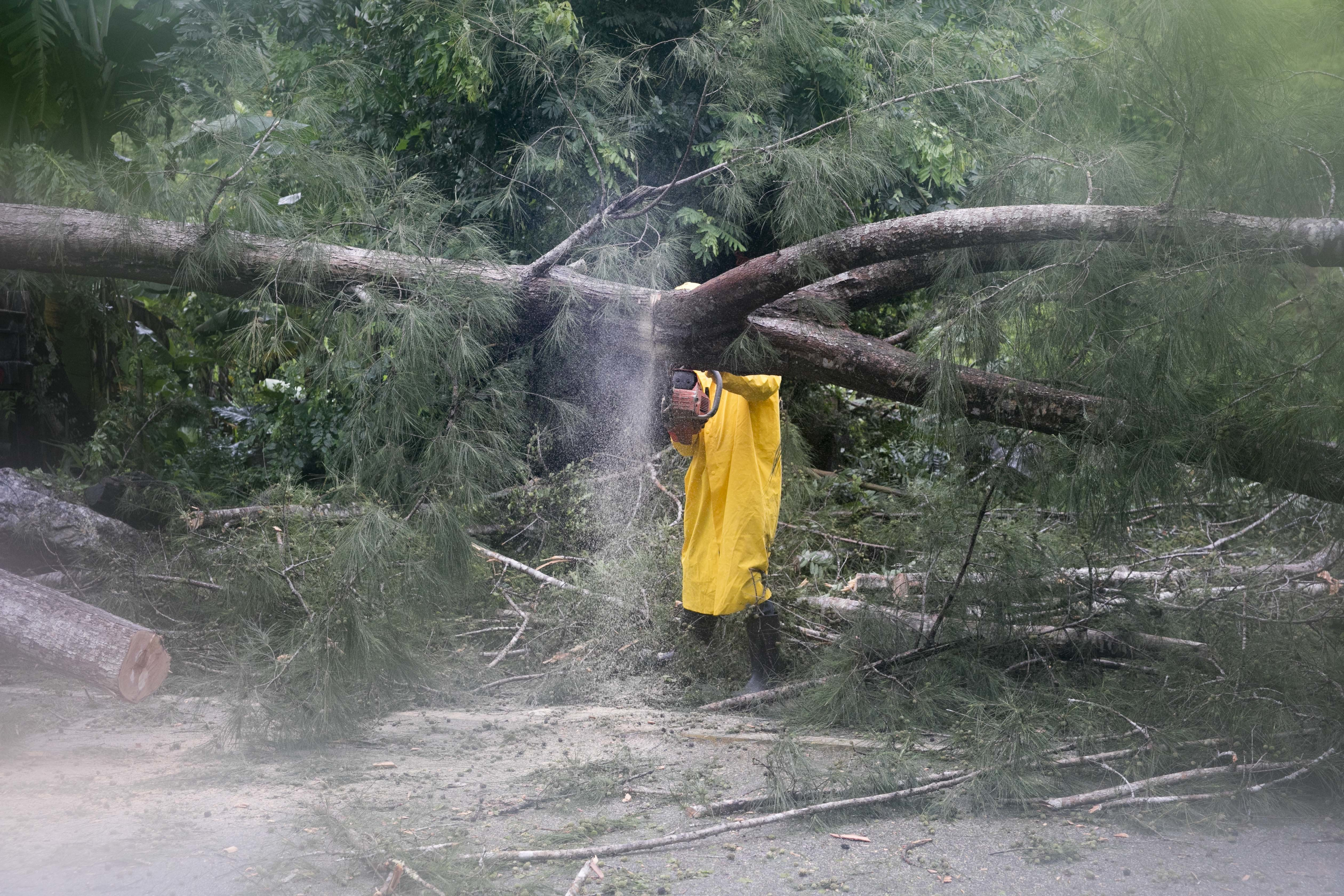 An employee from an electrical company works to remove a tree felled by Hurricane Irma, in Sanchez, Dominican Republic, Thursday, Sept. 7, 2017. Irma cut a path of devastation across the northern Caribbean, leaving thousands homeless after destroying buildings and uprooting trees. Irma flooded parts of the Dominican Republic when it roared by, just off the northern coast of the island it shares with Haiti. (AP Photo/Tatiana Fernandez)