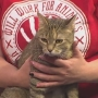HSSJC Pet of the Week: Patty