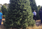 Representatives from the White House and Silent Night Evergreens examine potential Christmas trees for the Blue Room Sept. 25, 2017, at Hanauer's Tree Farms in Shawano County.