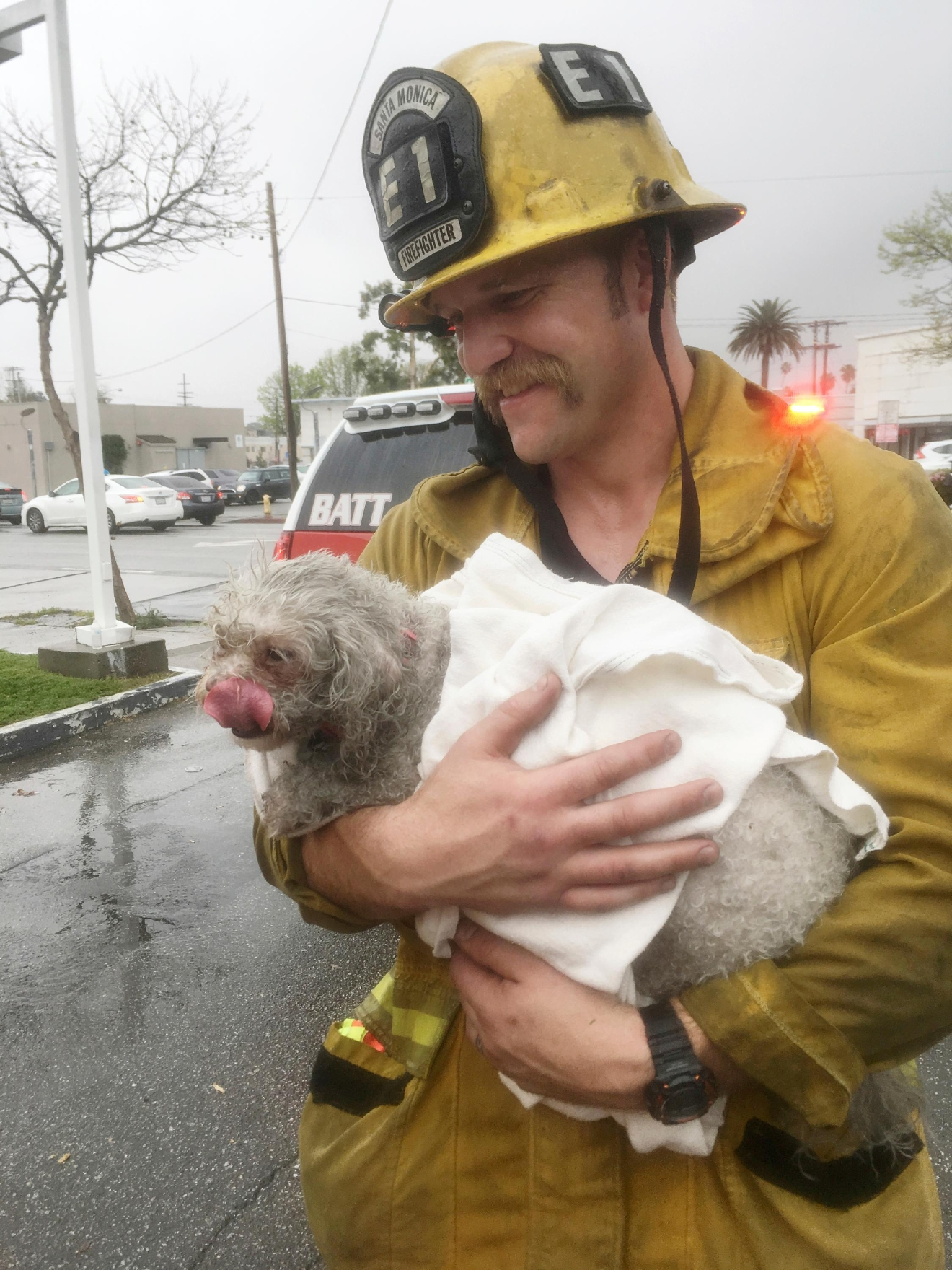 In this Tuesday, March 21, 2017 photo provided by Crystal Lamirande, Santa Monica firefighter Andrew Klein holding her dog, Nalu, in Santa Monica, Calif. Klein spent minutes giving mouth-to-snout resuscitation to the dog, who was pulled from a burning apartment. The pooch spent the next 24 hours in an oxygen chamber and is doing well. (Courtesy of Crystal Lamirande via AP)