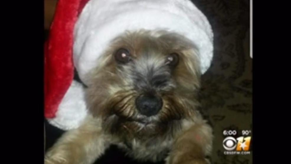 North Texas Yorkie Dies Hours After Grooming At Petsmart Woai