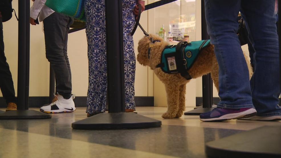 Fewer pets on planes? New legislation seeks to tighten standards