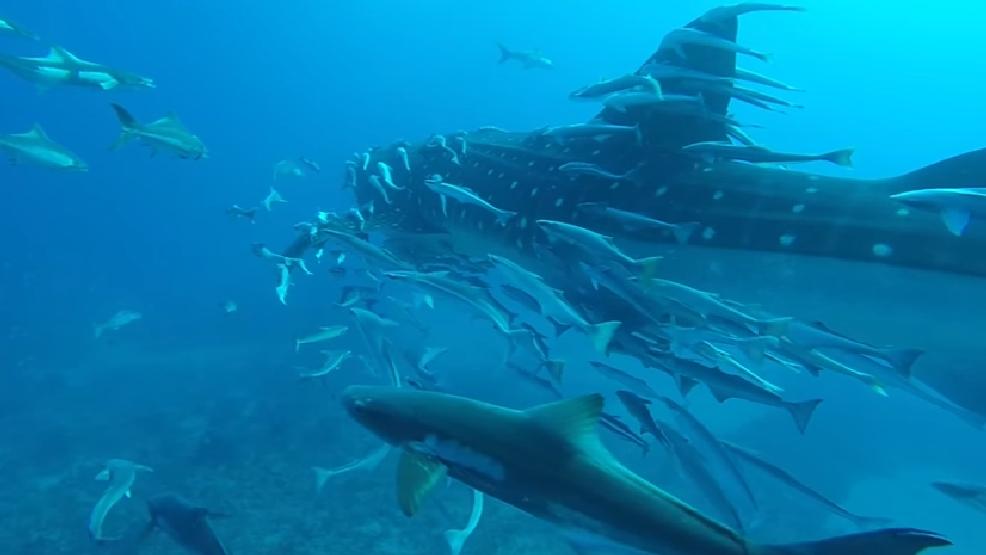 Whale Shark West Palm Beach