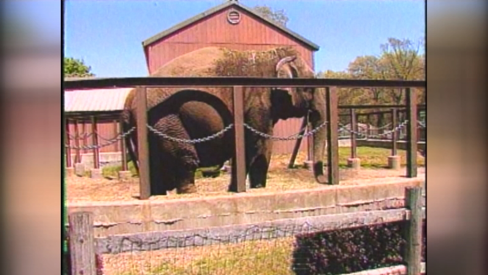 Zoo stories: Norton, Trixie and Fanny