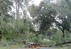 Trees Down -  Edisto PD.png