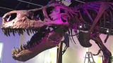 Photos: Sneak peak at 'A T. rex Named SUE' at Discovery Center of Idaho